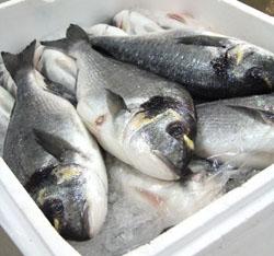 Les poissons les plus ou les moins contaminés par le mercure