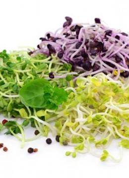 Tout savoir sur les graines germées : comment les consommer, les faire germer, les conserver…