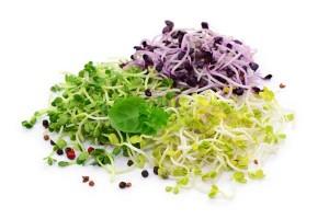 tout savoir sur les graines germ es comment les consommer les faire germer les conserver. Black Bedroom Furniture Sets. Home Design Ideas